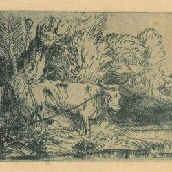 The bull ['Het stiertje'], Rembrandt, Etching, Bartsch B. 253